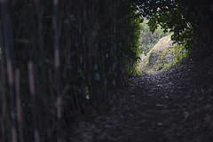 (Propangas) Tags: japan hiking hike trail jp