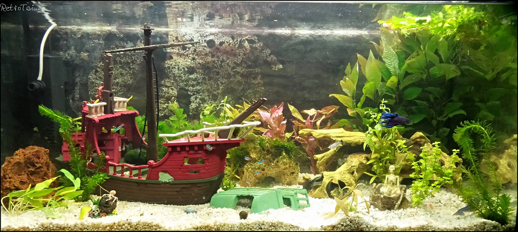 The world 39 s best photos of snail and toy flickr hive mind for Fish tank pirate ship