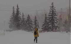 В метель (snaillamb) Tags: winter snow blizzard