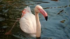 That Pink Beak