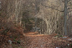fort (bulbocode909) Tags: nature suisse hiver arbres valais fully sentiers forts