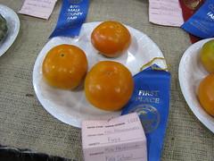 starr-091003-7542-Diospyros_kaki-Fuyu_fruit-Maui_County_Fair_Kahului-Maui (Starr Environmental) Tags: diospyroskaki
