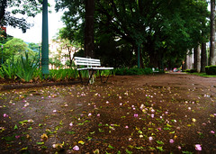 Banco da praa (Marcelo Alves - Fotgrafo) Tags: chuva banco praa marceloalves fotografomarceloalves