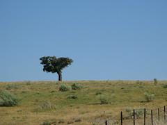 Ein einsamer Baum (pilgerbilder) Tags: pilgern pilgerfahrt pilgertagebuch vadellaplata grimaldocarcaboso