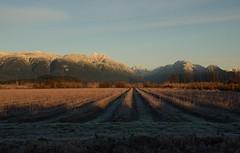 (Ian Threlkeld) Tags: winter landscape landscapes nikon scenery frost bc explore pacificnorthwest fields westcoast pnw mapleridge irt nikonphotos pittmeadows canadianlandscapes nikonphotography ridgemeadows explorebc d7000 nikonvancouver mynikonlife