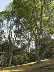 Parque Nacional, Bogot. (DAIRO CORREA) Tags: amrica colombia bogot capital latina correa cundinamarca suramrica gutirrez dairo latinoamrica dairocorrea