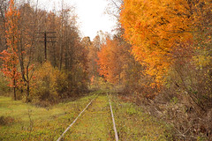 Waiting for Something to Do (craigsanders429) Tags: ohio fall fallcolors fallfoliage railroadtracks pennsylvaniarailroad abandonedrailroads summitcountyohio fallfoliagephotography prrakronbranch