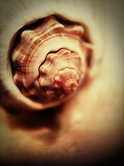 Seashell (Thad Zajdowicz) Tags: cameraphone light shadow brown abstract color colour macro art texture home nature lines mobile closeup fauna dark beige marine pattern breast nipple natural availablelight curves cellphone surreal maryland indoor depthoffield motorola seashell softfocus layers 365 bethesda vignette tabletop droid gastropod mollusk montgomerycounty 366 lamellae conchology photoborder organictexture zajdowicz