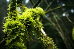 Fort humide (anarchitecte) Tags: wood green rain forest schweiz switzerland nikon suisse hiking pluie vert tamron wald regen fort bois mousse randonne humide 2470mm28 d7100