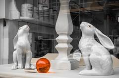 68/366 Hare Balls - 366 Project 2 - 2016 (dorsetpeach) Tags: england window shop vintage ball march globe hare retro sphere dorset 365 dorchester 2016 366 aphotoadayforayear 366project second365project