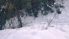 Abbottabad Snowfall (ihsanzahoor) Tags: winter pakistan snow nature photography february abbottabad