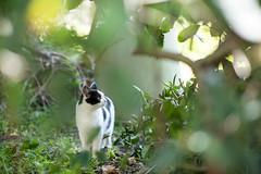 (23fumi) Tags: green cat nikon dof bokeh 85mm nikkor   d600  afs85mmf18g