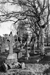 (Mark Greening) Tags: blackandwhite tree film cemetery grave bristol cross nikonf100 gravestone canfordcemetery