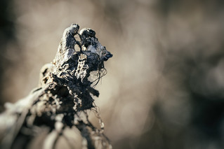 strange creatures, steppe animal  (explored)
