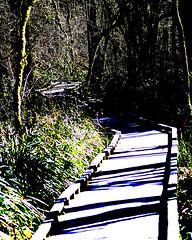 IMG_2229 (D_PaulAngel) Tags: bridge gimp deck posterized tualatinhillsnaturepark
