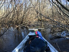 YV-22032016-simple-JR-2 (Jonathan Riverwalker) Tags: stream brook baboon stillwater canoeing february bog macdonald yrp paddler alders yearround