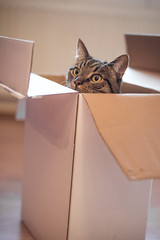 Cat in a box (Merlijn Hoek) Tags: camera portrait pet man slr beautiful animal cat 35mm wonderful photography nikon kitten kat feline fotografie photographer dof depthoffield full mooi fullframe nikkor portret huisdier dier depth poes digitalslr kamera merlijn hoek beest fotograaf poesje scherp prachtig scherptediepte d810 autodidact amsterdammer bestofcats 35mmformat merlijnhoek huiskat prachtigefoto nikond810 digitalsinglelensreflex catmoments fullframedigitalslr 36megapixel schitterendefoto 3624mm mooiefotos