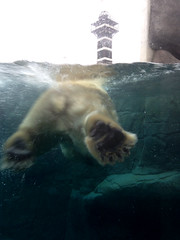 Low Five Polar bear Paw