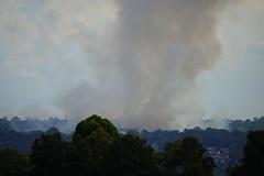 Hazard reduction burn-off (christinemargaretlynch) Tags: bluemountains hazard burnoff reduction