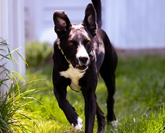 Rex in action (J. Bark) Tags: rescue dog nikon action 80200 d7000