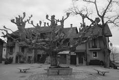 20160409Yvoire (31 sur 32) (calace74) Tags: france fortification hautesavoie rhonealpes laclman yvoire villemdival