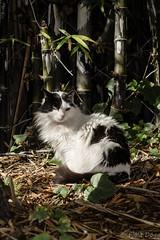 (Fjola Dogg) Tags: vacation españa pet cats holiday animal animals cat canon island zoo spain europe tenerife kisa köttur evropa dýr junglepark evrópa fjóladögg canonpowershotg7x canong7x