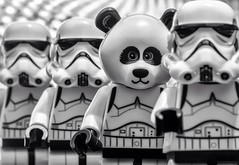 The Rogue One (DeanoNC) Tags: starwars panda panasonic stormtrooper minifigures oneofthesethings macromondays gx7 therogueone