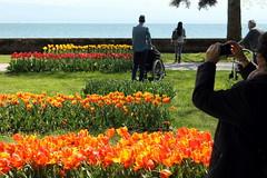 fte de la tulipe (overthemoon) Tags: flowers red people lake yellow fleurs schweiz switzerland photographer suisse tulips lakeside svizzera tulipfestival wheelchairs vaud morges tulipes ftedelatulipe romandie parcdelindpendance