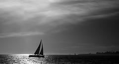 Sailing Santa Cruz (tryggphoto) Tags: ocean california santacruz sailing pacific northern