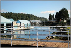 (CanMan90) Tags: ocean trees seascape canon fence reflections boats outdoors marine britishcolumbia nanaimo vancouverisland wharf friday boatyard cans2s rebelt3i