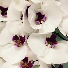 #flowers #beautiful #white #purple #rungis (jessicateixeira194) Tags: flowers white beautiful purple rungis