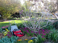 LEGO lawnmower (Bolt of Blue) Tags: flowers lego palosverdes southcoastbotanicgarden seankenney natureconnects