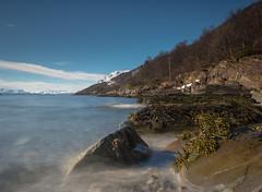Shoreline (Trond-Arvid) Tags: mountain snow seaweed stones shoreline mussels tang fjra blger rypen skoglandet