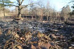 High Park, April 2016, Controlled Burn (Brian Labelle) Tags: park toronto forest highpark blackoak savannah controlledburn