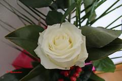 14,ROSA BLANCA (patryelpego) Tags: verde hojas flor rosa blanca ramo