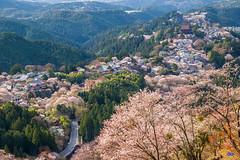 IMG_5345 (Rj Wu) Tags: japan cherryblossom  nara kansai           sukura                 hanayaguraview