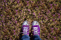 (~ cynthiak ~) Tags: selfportrait purple prince converse chucks chucktaylor purplerain selfie odc letsgocrazy werehere 366days fromwhereistand img3475 116366 day116366 ourdailychallenge 25apr16 hereios 366the2016edition 3662016 3651for2016