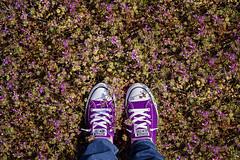 (~ cynthiak ~) Tags: selfportrait purple prince converse chucks chucktaylor purplerain selfie odc letsgocrazy werehere 366days fromwhereistand img3475 116366 day116366 ourdailychallenge 25apr16 hereios 366the2016edition 3662016 3651for2016