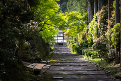 Shodenji Temple, Kyoto (Christian Kaden) Tags: japan temple kyoto 京都 日本 kioto kansai tempel 関西 お寺 仏教 仏閣 shodenji 正伝寺