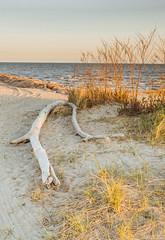 Driftwood_DSC7701.jpg (tahcreative) Tags: ocean sunset sea vacation beach nature landscape seaside spring sand dusk connecticut newengland driftwood coastal shore serene relaxation silversands 2016 silversandsstatepark