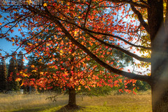 IMG_6033_4_5_tonemapped (newbs216) Tags: autumn trees landscape hdr mtwilson