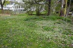 030.Wildflowers2-park (aetherspoon) Tags: park flowers blooms greentree