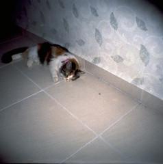 Kiki (mcdeck) Tags: analog cat 35mm square ana mini an ishootfilm diana squareformat analogue filmisnotdead dianamini