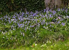 20160424-5D3_9449 (Terry Payman) Tags: garden jeannette
