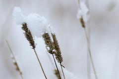 snow hat (Costantino Mauro) Tags: winter white snow hat canon bokeh straw neve tamron inverno bianco cappello 70300 70d