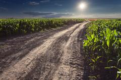 Through the vast II (Radisa Zivkovic) Tags: road sky cloud sun rural corn track earth path wheat serbia dirt crops agriculture plain gravel vastness titelhill