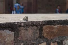 Chipmunk (_NicoDem_) Tags: india canon mark delhi ii 5d complex qutub minar 2015 5dmarkii 5dmkii