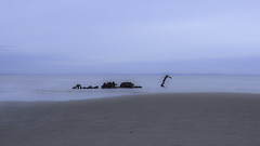 Loch Ness Monster ? (adrian.sadlier) Tags: sea howth beach sand debris shoreline illusion lowtide lochnessmonster claremontbeach