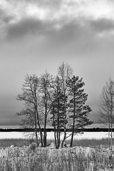 Trees (Jon Norppa) Tags: blackandwhite nature finland luonto easternfinland nikkorafs70200mmf28vr2 nikond750