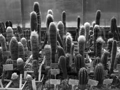 Balchik (Noe_Kiddo) Tags: cactus sofia ciudad viajes bulgaria balchik varna